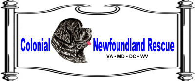 Colonial Newfoundland Rescue